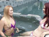 AJ Applegate Fucks Her Sexy Stepsister In A Bikini